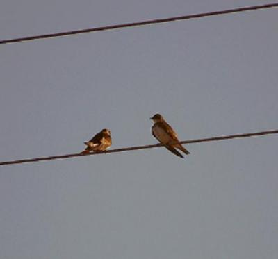 20090205220048-high-tension.jpg