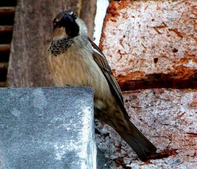 20090830012346-birdy.jpg