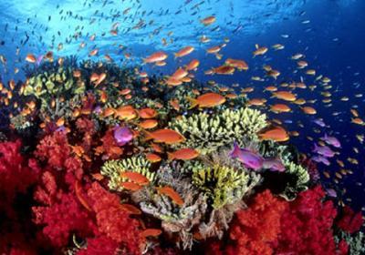 20101202033126-coral-peces.jpg